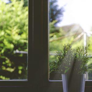 Raam zonlicht plant